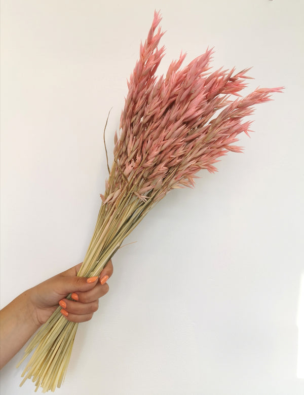 *New* Pink Oats Dried Flower Bunch