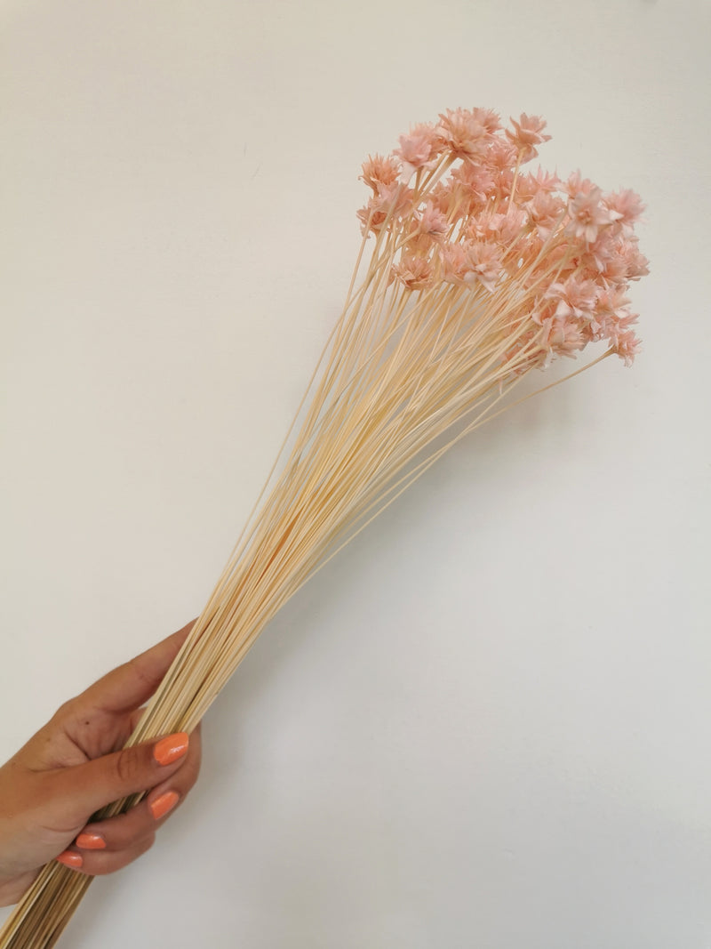 *New* Pink/peach Dried Hill Flower