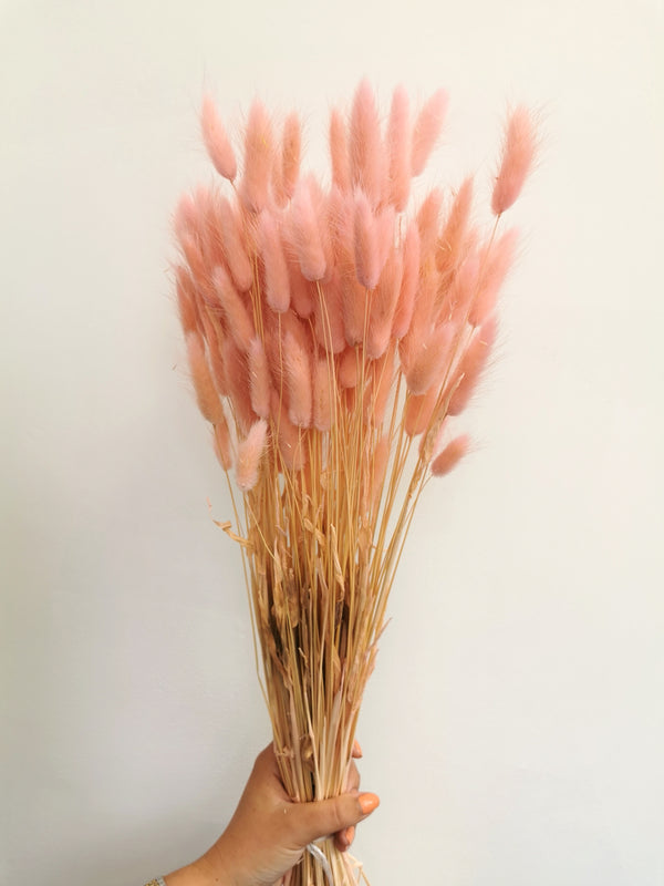 *NEW* Dried Pink Bunny Tail | Lagurus | 100pc