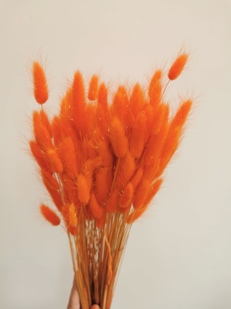 *NEW* Dried Bright orange Bunny Tail | Lagurus | 100pc