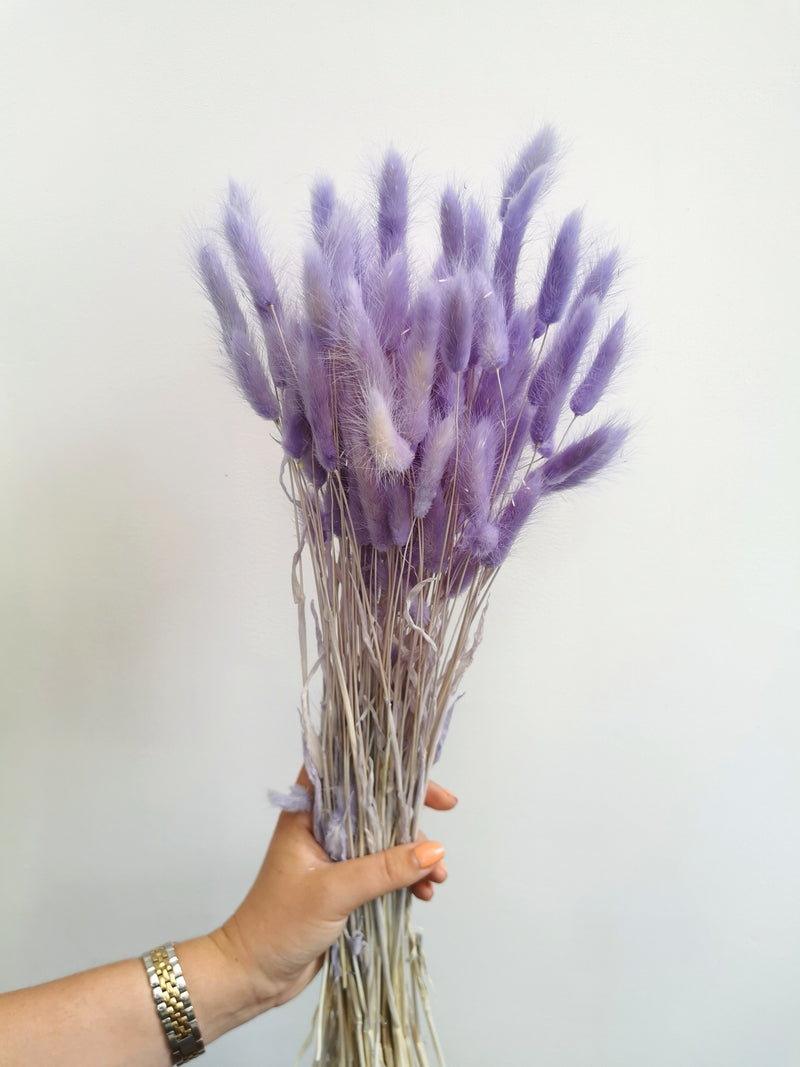 *NEW* Dried Lilac Bunny Tail | Lagurus | 100pc