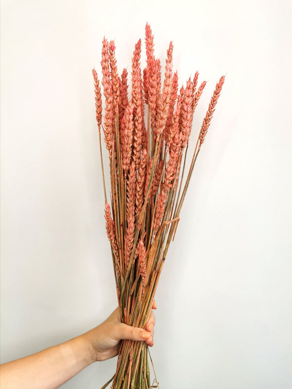 *NEW* Pink Coral Dried wheat