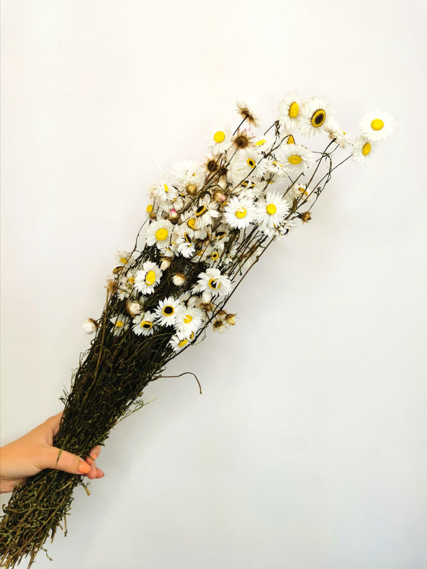 *NEW* Dried Acrolinium flower bunch | Daisy