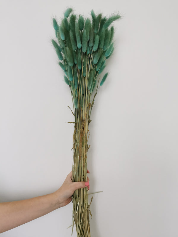 Dried Teal Bunny Tails | Lagurus | XL Bunch
