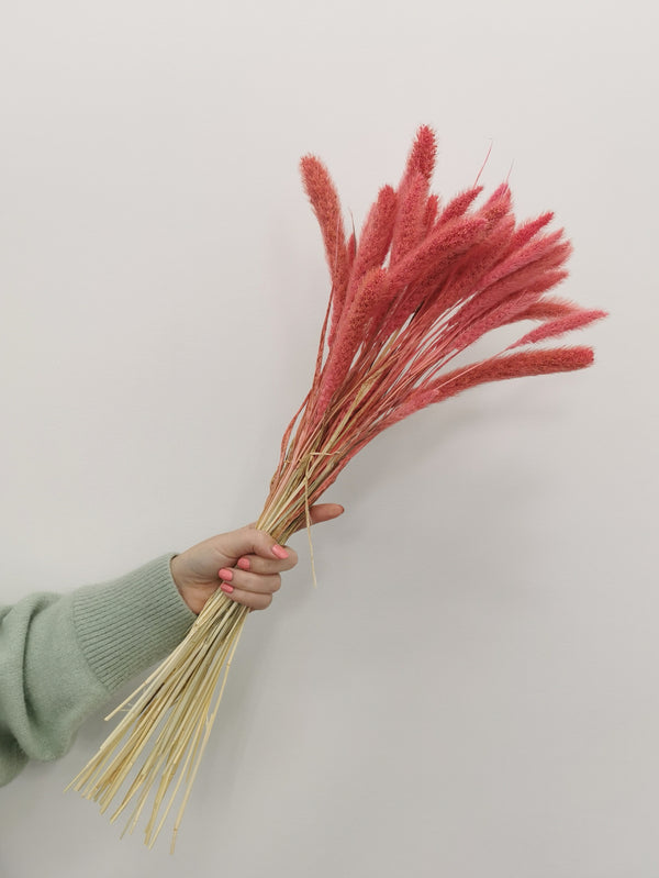 Fluffy Pink Setaria Dried flower bunch