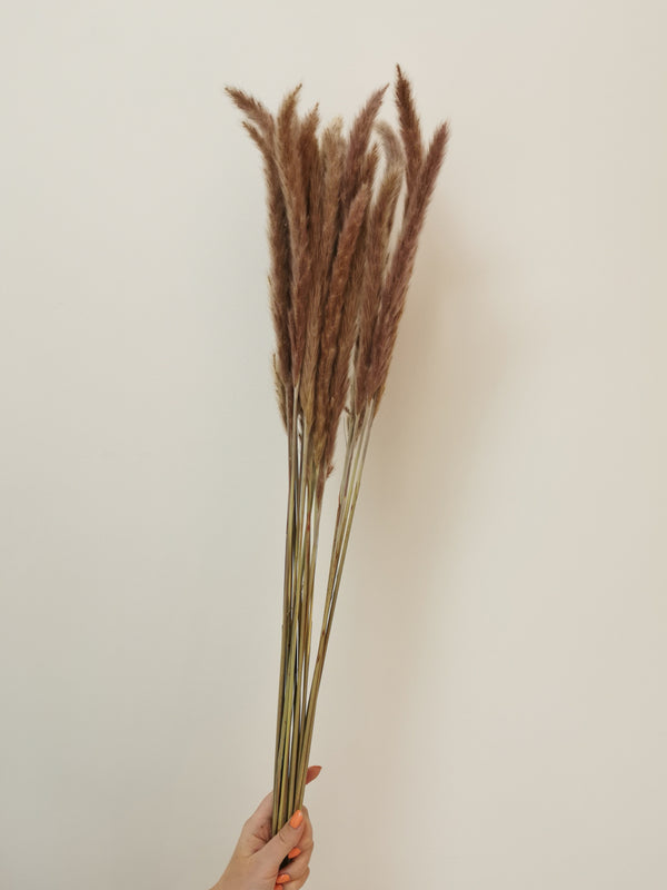Mini Brown/Purple Toned Pampas Stem Bunch