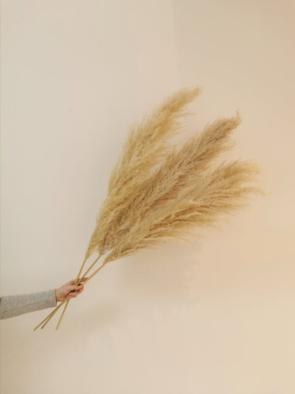 Natural White Dried Pampas Grass (Floor Standing 115cm)