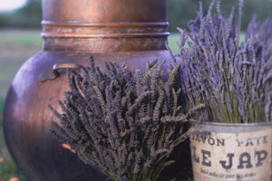 On location - The Lavender Harvest