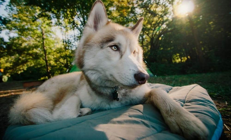 Dog Travel Bed - Three Wolves Provisions