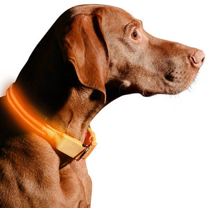 LED Dog Collar - Three Wolves Provisions