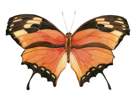 Orange Butterfly - Priscilla George Fine Art