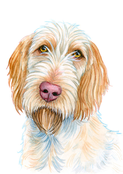 Spinone Orange - Priscilla George Fine Art