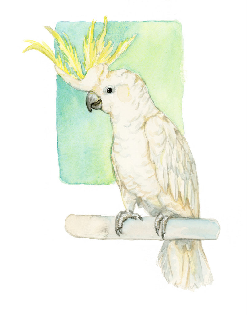 Cockatoo - Priscilla George Fine Art