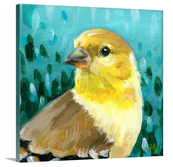 Goldfinch Female Wrapped Canvas Print - Priscilla George Fine Art