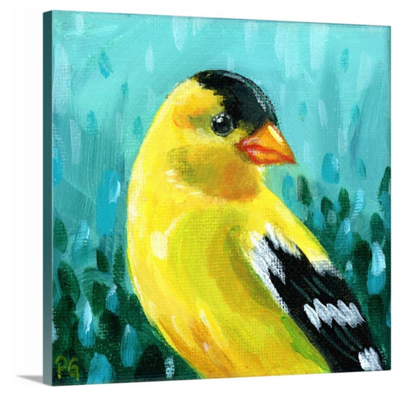 Goldfinch Male Wrapped Canvas Print - Priscilla George Fine Art