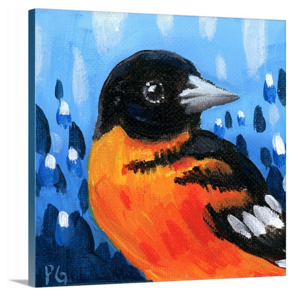 Oriole Male Wrapped Canvas Print - Priscilla George Fine Art