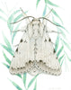 Cottonwood Dagger Moth - Priscilla George Fine Art