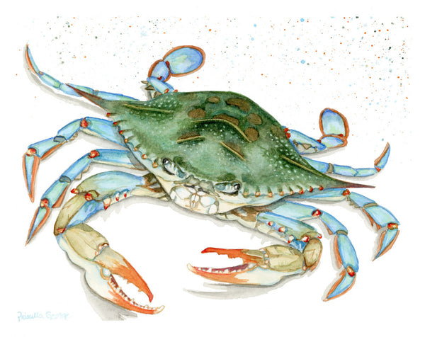 Maryland Blue Crab - Priscilla George Fine Art