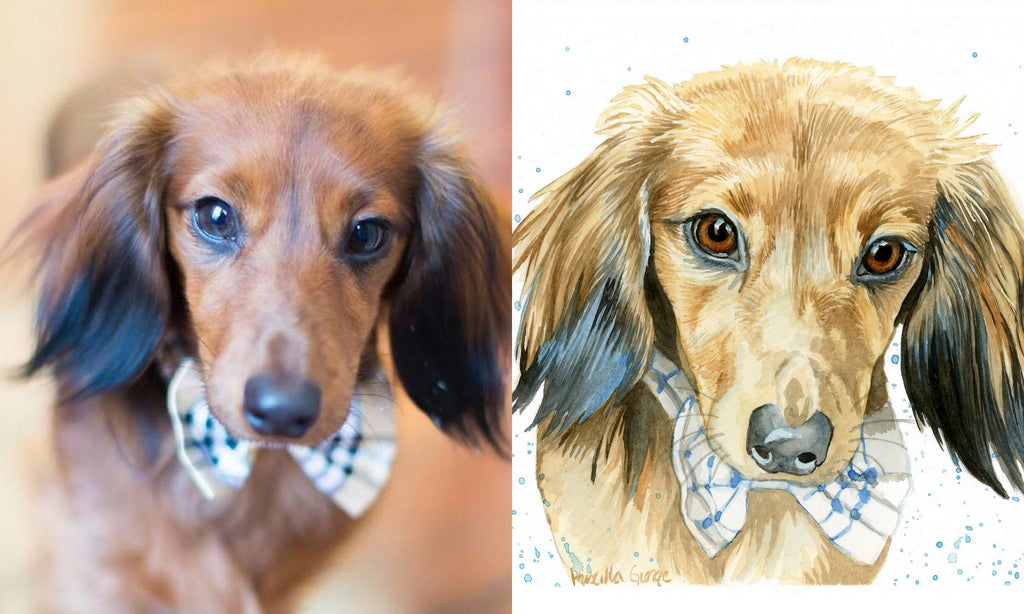 Pet Portrait - Square Sizes - no background - Priscilla George Fine Art