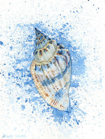 Conch Shell - Priscilla George Fine Art