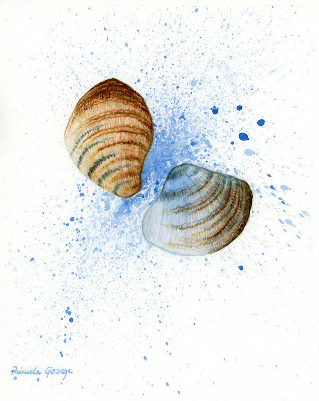 Two Sea Shells - Priscilla George Fine Art