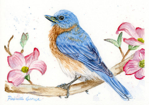 Eastern Bluebird and dogwood - Priscilla George Fine Art