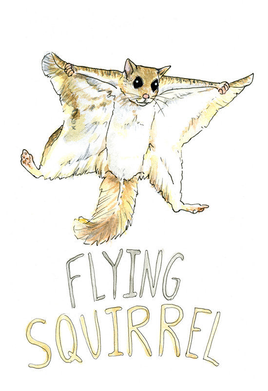 Flying Squirrel - Priscilla George Fine Art