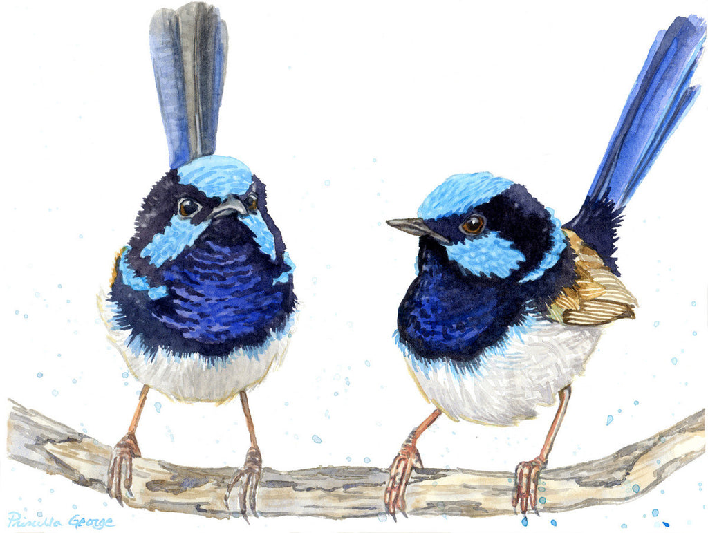 Fairy Wrens - Priscilla George Fine Art