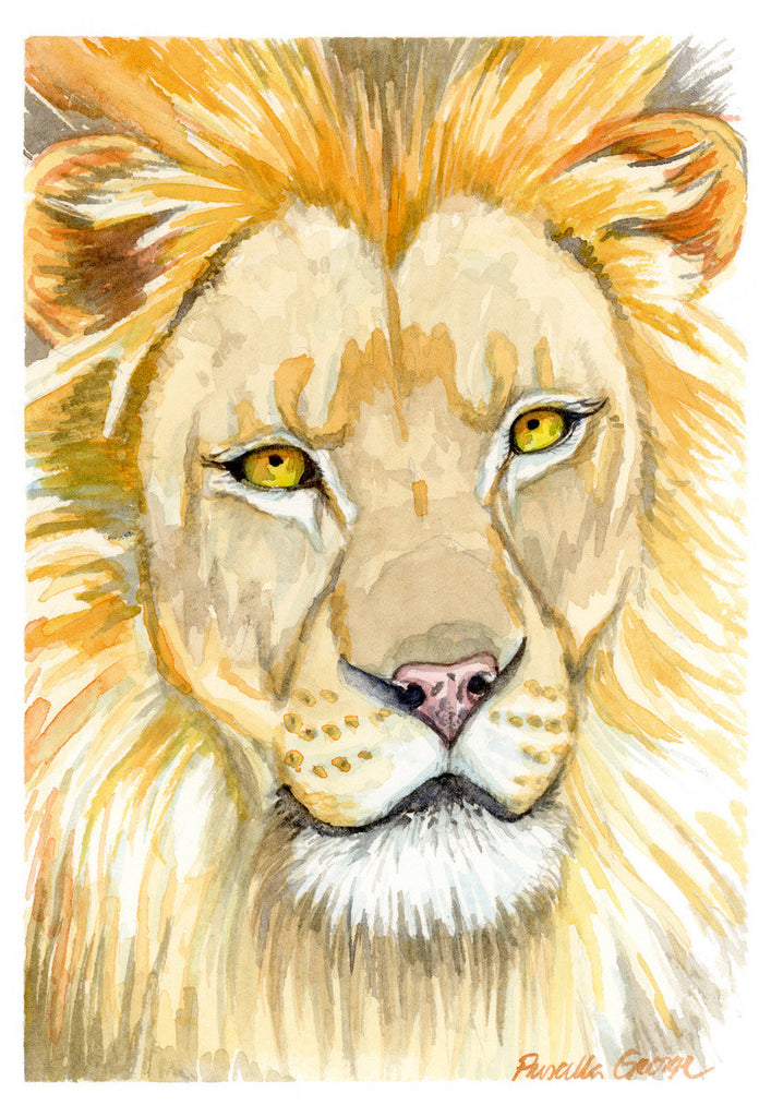 Lion - Priscilla George Fine Art
