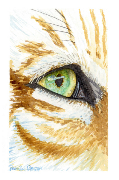 Tiger Eye - Priscilla George Fine Art