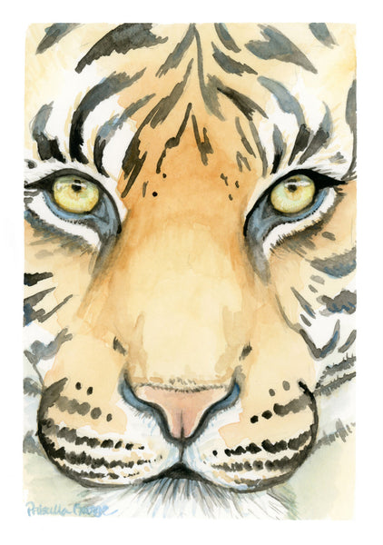 Tiger Face - Priscilla George Fine Art