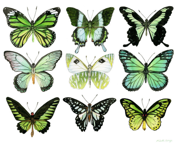 Green Butterflies - Priscilla George Fine Art