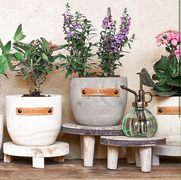 Party Thyme - Wood Planter