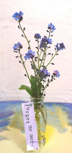 Cards, Forget-me-not Pack of Three
