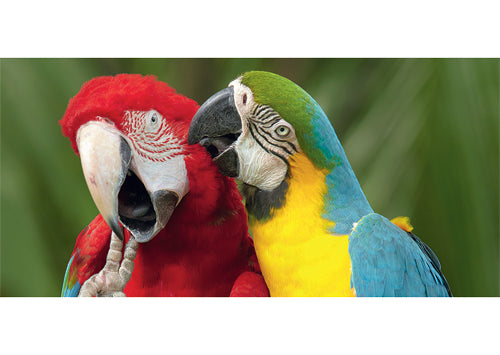 Macaw Friends