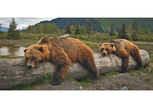 Lazy Brown Bears