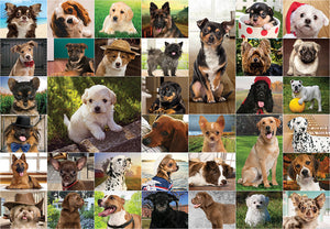 Dogs, Dogs, Dogs 1000pc: Due Mid July