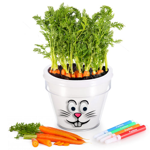 DIY Plant a Carrot Kit