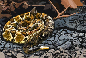Pit Viper Envenomation In The United States: Rattlesnake, Copperhead, Water Moccasin
