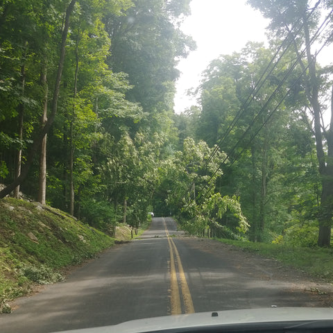 Photo of tree down on power lines