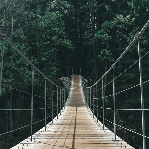 Photo of swinging bridge in woods