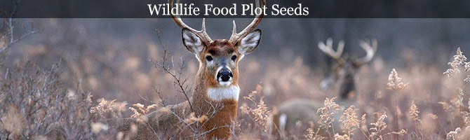 Wildlife Food Plot Seeds