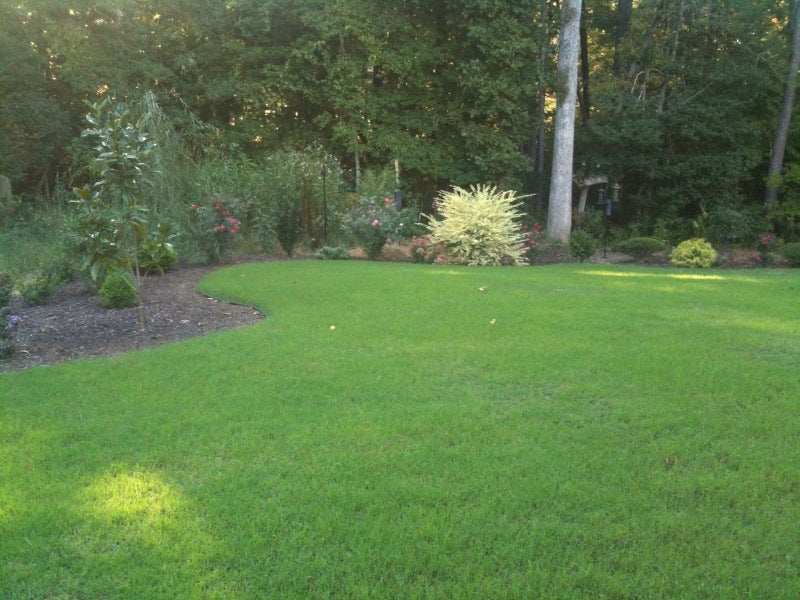 Blackjack Bermuda Grass Seed - 25 Lbs.