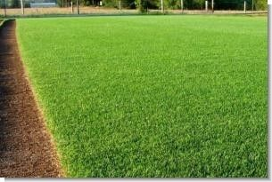 SeedRanch Perennial Ryegrass Seed - 50 Lbs.
