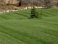 Midnight Kentucky Bluegrass Seed - 5 Lbs.