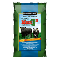 MaxQ II Texoma Forage Tall Fescue Grass Seeds- 25 lbs.