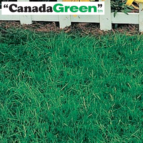 Canada Green Grass Seed - 6 Lbs.