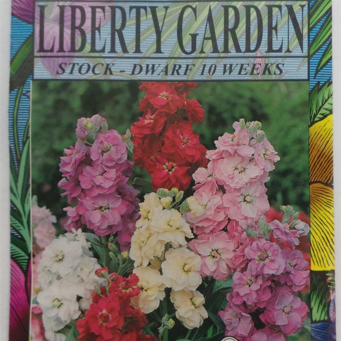 Stock Dwarf 10 Week Annual Flower Seeds - 1 Packet