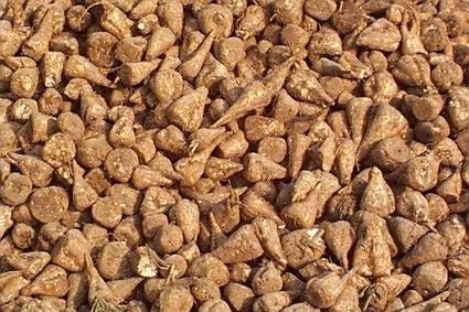 SeedRanch Sugar Beet Seed - 10 Lbs.