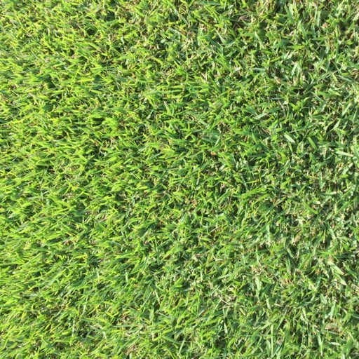 Empire Zoysia Grass Plugs - 1 Tray